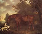 Clifton Tomson A Bay Hunter and Two Hounds in A Wooded Landscape oil
